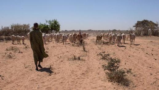 cibo in Africa